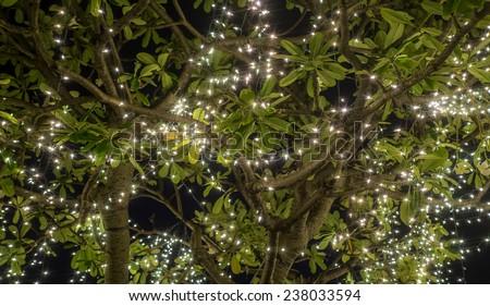 light on the tree - stock photo