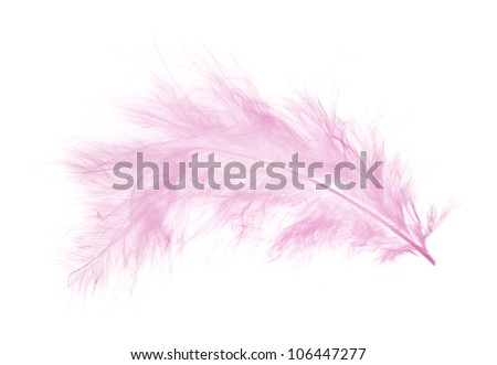 light pink feather isolated on white background
