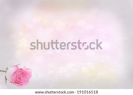 light pink floral background with rose bud, card design background - stock photo