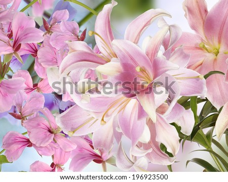 Light Pink Lily.Floral background - stock photo