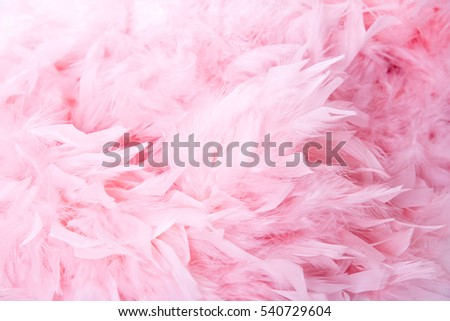 Light powder pink feathers for use as texture or background