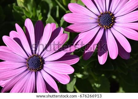 Light Purple Flowers At Dallas Arboretum