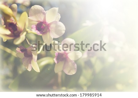 light purple orchid , soft color for background