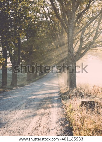 Light rays in forest in foggy morning in countryside - vintage film effect