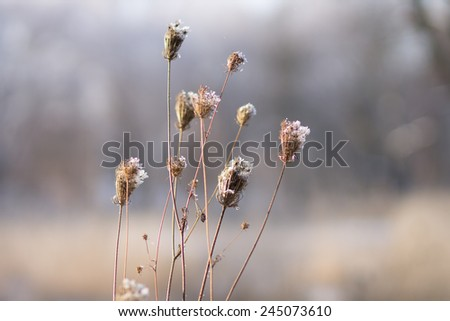 Light rime on winter flowers over blurred nature background - stock photo