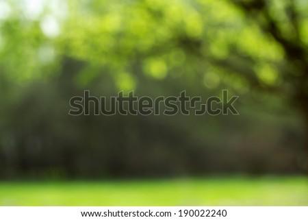 Light shining on tree leaves - stock photo