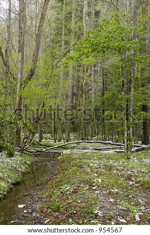 Light Snow, Cataloochee Cove, Great Smoky Mtns NP, NC