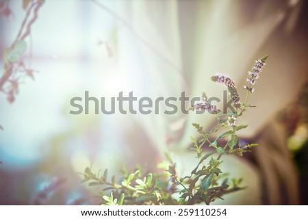 Light soft floral background - stock photo