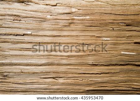 light texture of an oak  - stock photo