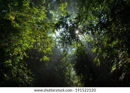 light through the leaves of bamboo in forest - stock photo