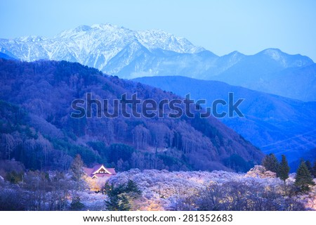 Light up of Cherry Blossoms and Japan Alps, Takato Castle Site Park, Nagano, Japan