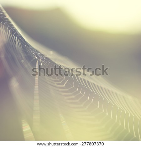 light vintage spider web on nature green background - stock photo
