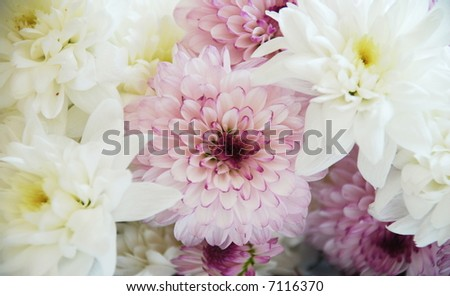 light-violet and white flowers