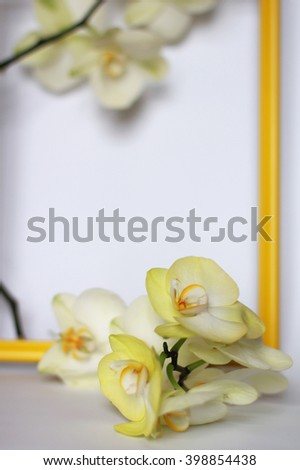 Light yellow Phalaenopsis orchids and yellow frame blurred on white background selective focus