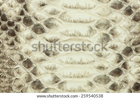 Light yellow python  leather, skin texture for background. - stock photo