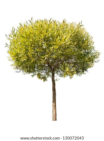 Small Tree Stock Images, Royalty-Free Images & Vectors ...
