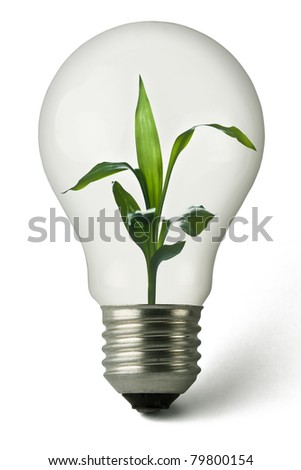 Lightbulb with a plant growing inside - stock photo
