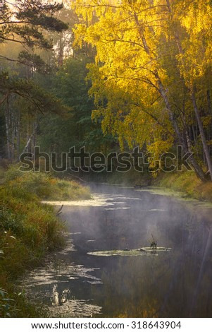 Lighted birch trees with yellow leaves over autumn river