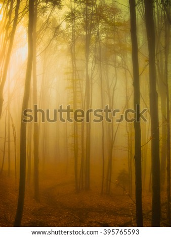 Lighting fog in forest