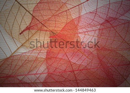 lighting transparent leaf