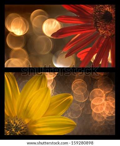 lights and flowers