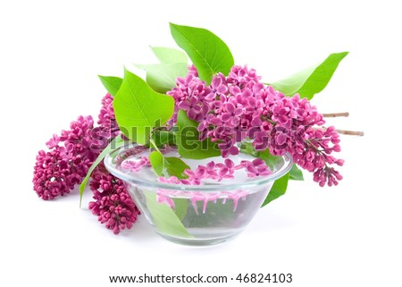 Lilac and a bowl of water on a white background