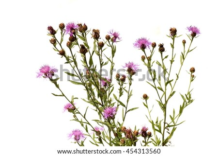 lilac and purple flowers thistle, buttercup, green stems, branches, leaves and buds - stock photo