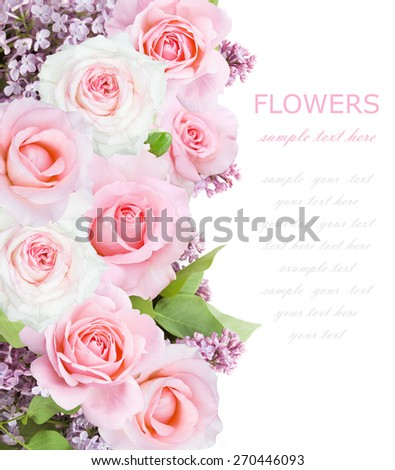 Lilac and rose flowers background isolated on white with sample text