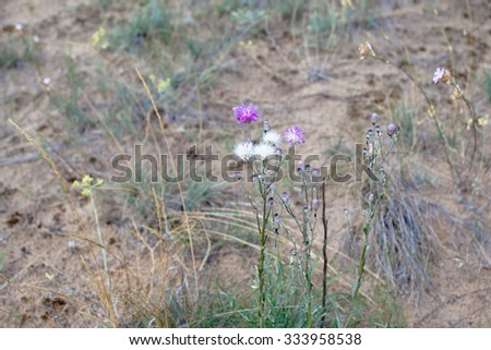 Lilac and white wildflowers on a sand