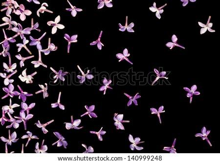 Lilac background - stock photo
