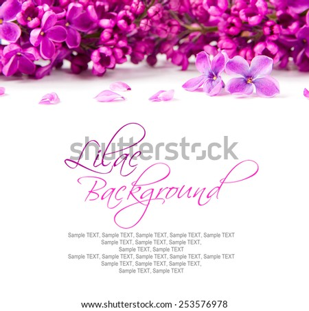 Lilac blooms on on white surface with space for the text - stock photo