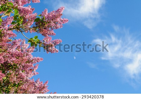 Lilac branch on a background of blue sky with copyspace - stock photo