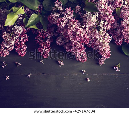 lilac branch on a black background. blooming branch of lilac (Syringa). The beautiful lilac on a black wooden background  - stock photo