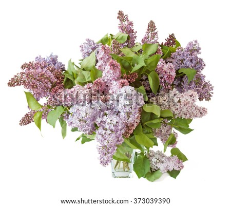 Lilac bunch in vase isolated on white background - stock photo
