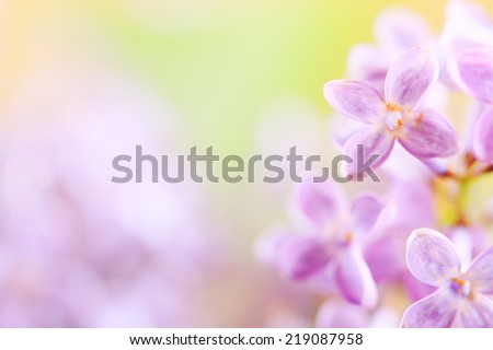 Lilac bush with selective focus to create painterly effect in the background and detail on a few of the blossoms in the foreground. - stock photo