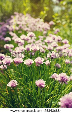 lilac flower bloom group in the garden with grass - stock photo
