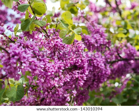 Lilac flower close-up photo as a nature background - stock photo
