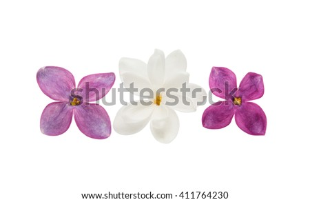 lilac flower isolated on white background - stock photo
