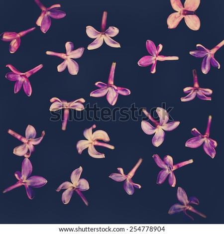 Lilac flowers - stock photo