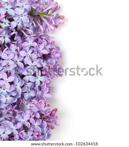 lilac flowers and empty space for your text - stock photo