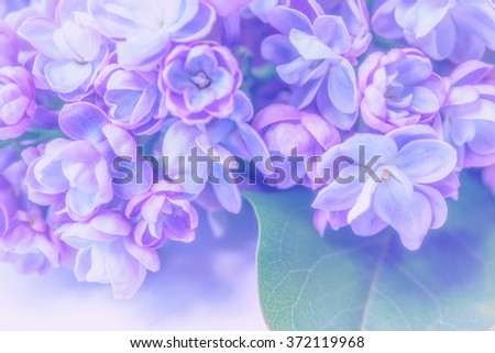 Lilac flowers branch. Greeting gift card background. Vintage soft toned