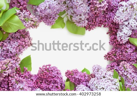 Lilac flowers bunch isolated on white background. Lilac flowers frame - stock photo