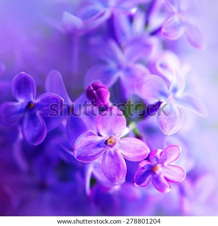 Lilac flowers bunch white art design background. Beautiful violet Lilac flower closeup. Watercolor nature floral background - stock photo
