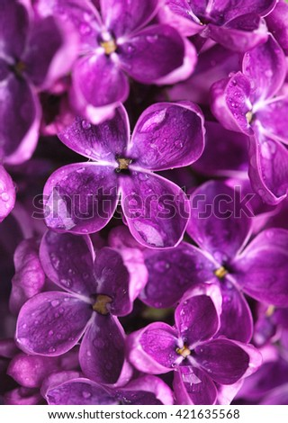lilac flowers. close up - stock photo