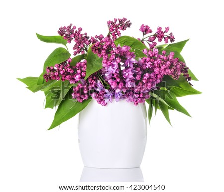 Lilac flowers in a white vase and isolated on white background