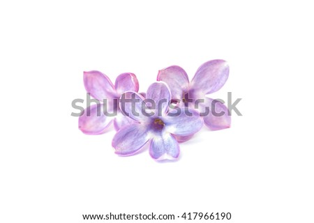 Lilac flowers isolated on a white background. Lucky five petal flower. - stock photo