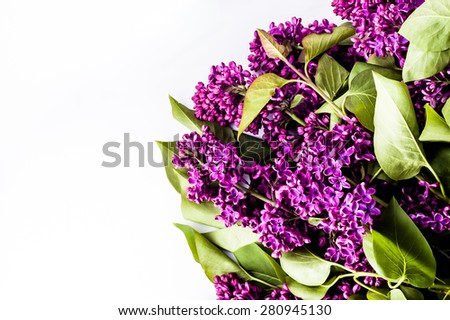 Lilac flowers on white background useful as greetings card, invitation cards, wedding invitation and postcards with place for text. - stock photo