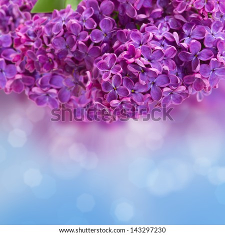 Lilac flowers  with defocused sky  background with copy space - stock photo
