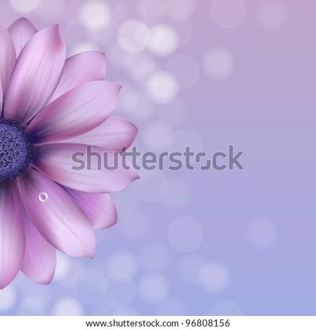 Lilac Gerber With Water Drop - stock photo