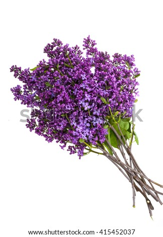 lilac on a white background